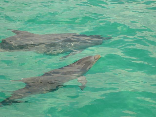 Mama and Baby Dolphin